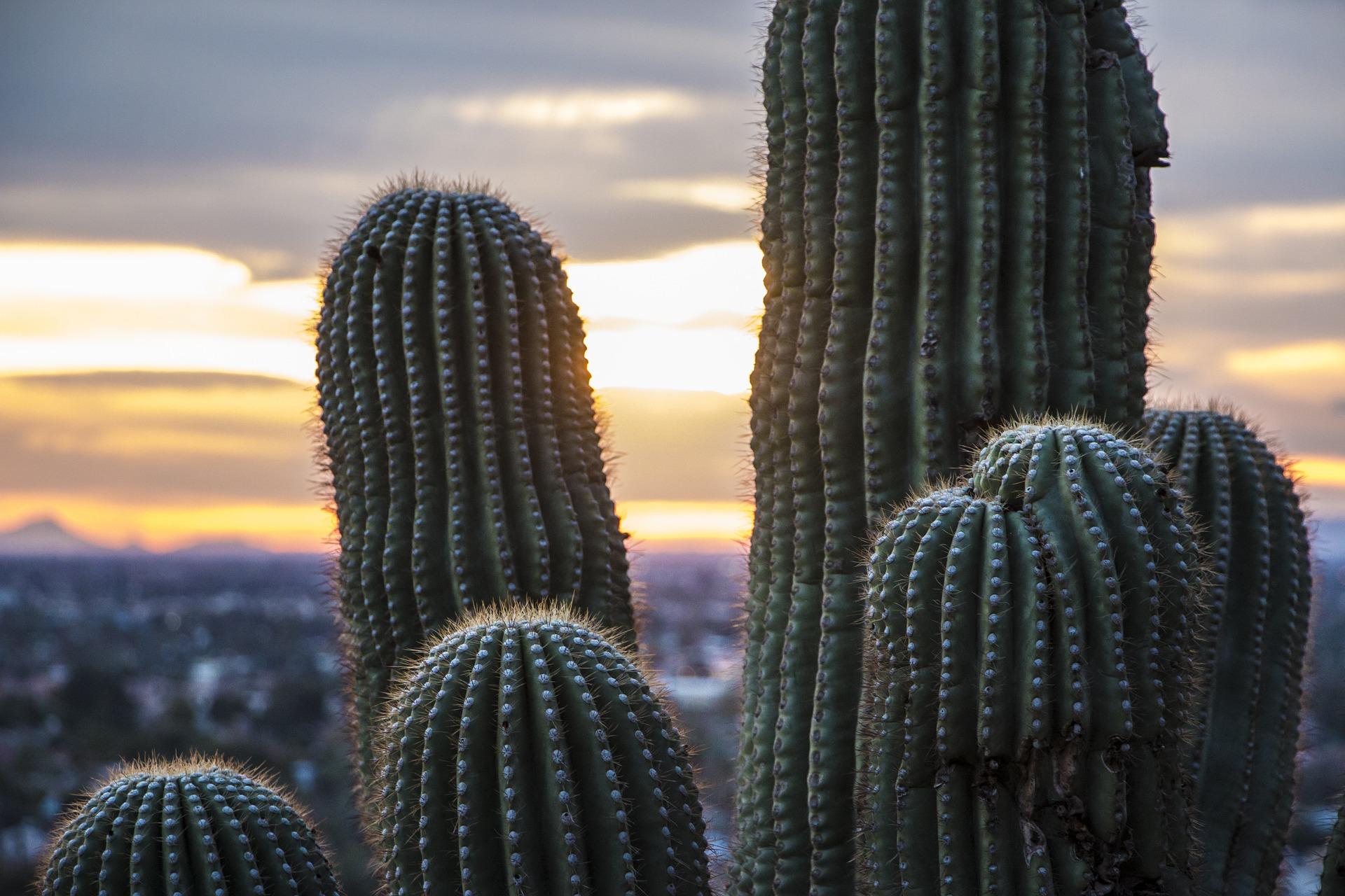 Arizona Cactus Travel